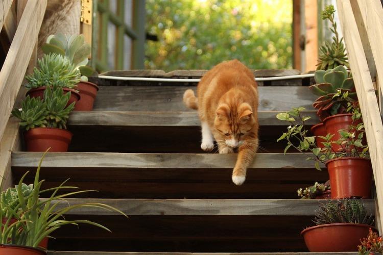 ¿Por que los gatos se escapan de la casa