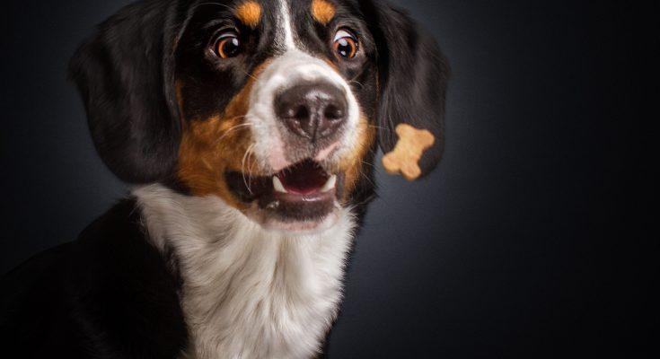 Snacks para perros 2