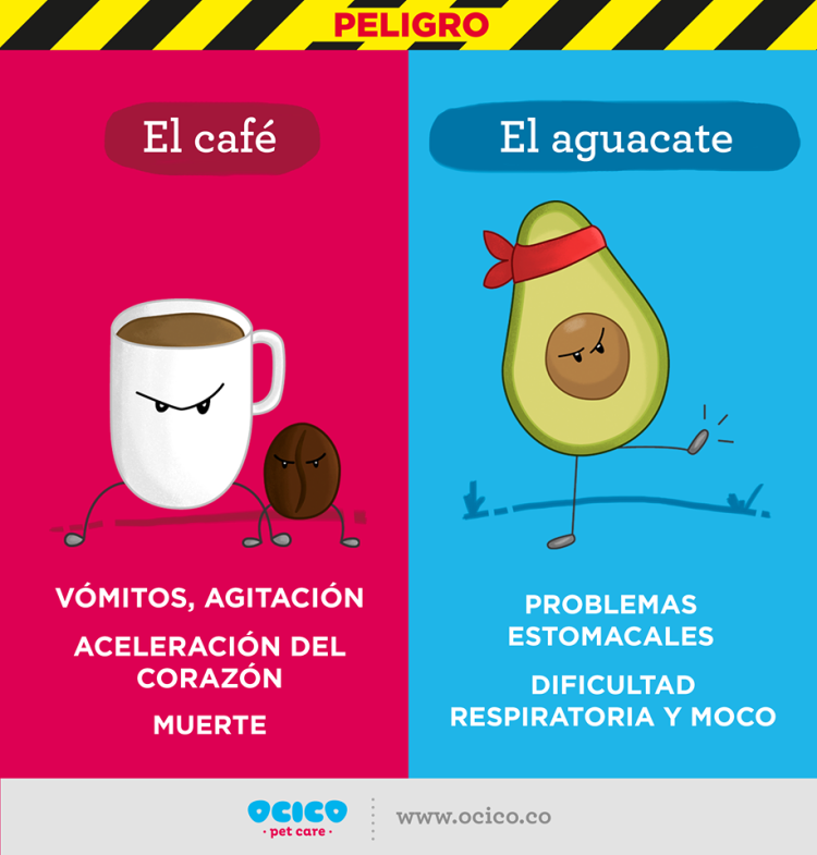 Aguacate y Cafe